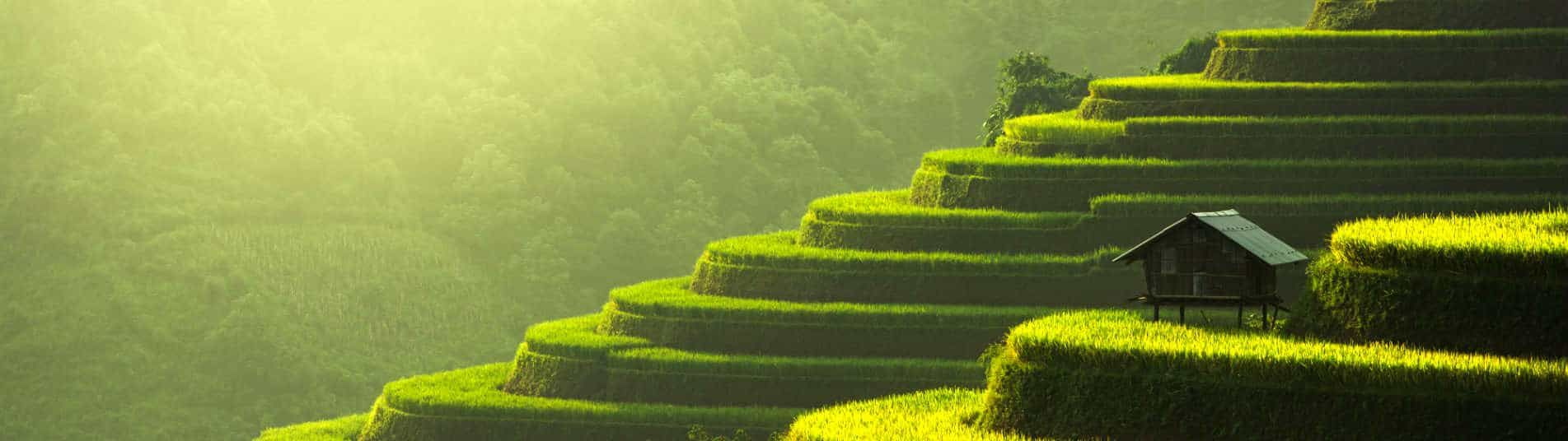 Rizière en terrasse dans le nord du Vietnam