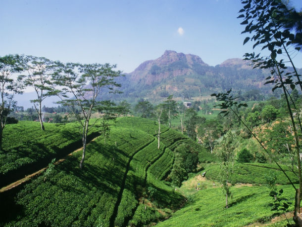 Circuit Sérénité du Sri Lanka - 1